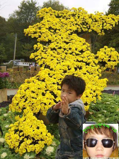 [PRE-DEBUT] Seventeen Dino (Lee Chan) 5